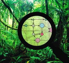 dzsungelhaboru_vezer